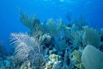 Récif corallien Iles Turks et Caicos