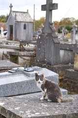 Cat in a cemetery at All Saint's Day