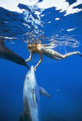 Dolphin trainer scratches Bottlenose Dolphins near surface
