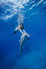 Dolphin trainer interacting with Bottlenose Dolphin