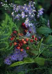 Aster 'Photograph' and rosehips of rose 'Pleine de Grace'