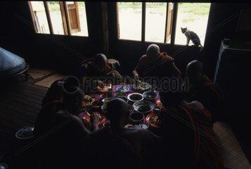 Chat de gouttière observant un repas de moines Birmanie