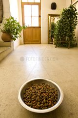 Dry dogs in the hallway of a house France