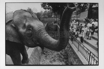 An elephant in the zoo of Hanoi Vietnam