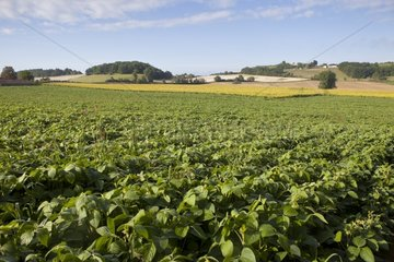 Extensive cultivation of soybean and sunflower France