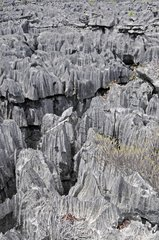 Tsingy limestone formations in Madagascar