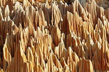 Tsingys red north of Madagascar