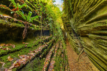 Crevasses of Saint-Sylvestre populated by numerous ferns and mosses  Haute Savoie  near the Massif des Bauges  Alpes  France