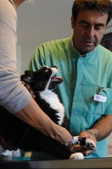 Examination of an aggressive cat by a veterinarian