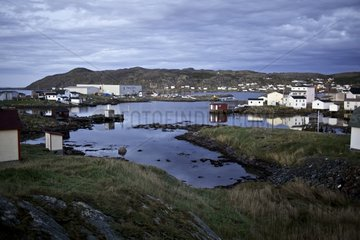 Processing plant sea cucumber Fogo island Newfoundland