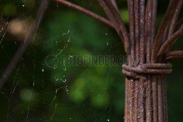 Cobweb on a scupture in a garden