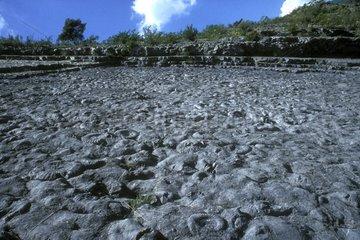 Slabs Ammonites to Digne-les-Bains France
