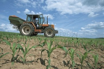 Spreading of Amonitrate on piece of young corn France
