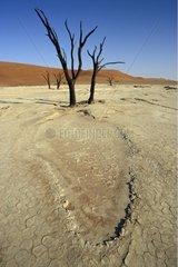 Dead trees drained Lake of Dead Vlei Sossusvlei Namibia