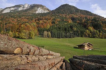 Logs near a sawmill Savoy Chablais Alps France