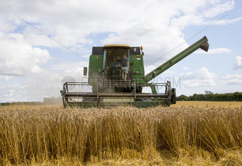 Wheat harvest in summer - GB