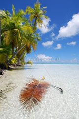 White sand beach and palm trees French Polynesia