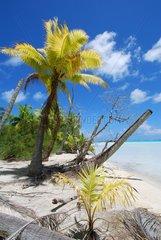White sand beach and palm trees on Blue Lagoon island