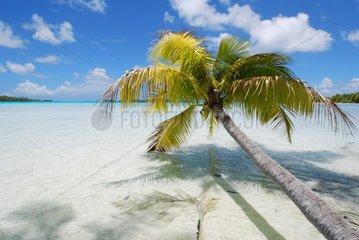 Palm trees on a beach French Polynesia