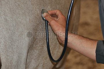 Auscultation of a Horse France