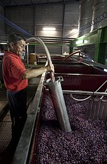 Making wine in a cellar Cotes de Beaune France