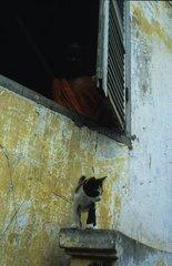 Chaton de gouttière devant une fenêtre Asie