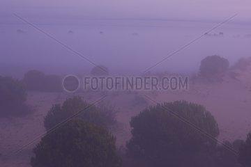 Landscape of Donana NP Andalousie Spain