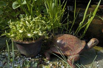 Hosta 'Little Ceasar' and scupture of turtle in Belgium