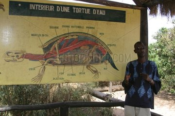 Panel about a water turtle in Senegal