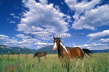 Horses grazing in a meadow fenced Santa Fe USA
