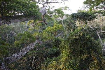Amazonian forest green and lush Peru