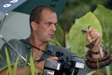 Photographer immobilizing a snake French Guiana