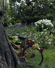 Cycling raised against the trunk of a tree in summer