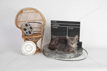 Kitten lying on a reel of film in front of a movie clap on white background