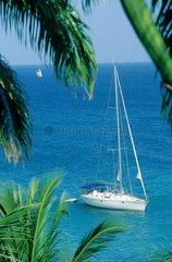 bateau de plaisance  voilier  palmier