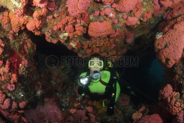 Coral reef and Diver Indonesia
