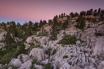 Karstic landscape  Parmelan limestone pavement. France  Haute-Savoie (74)  Bornes Massif  Alps