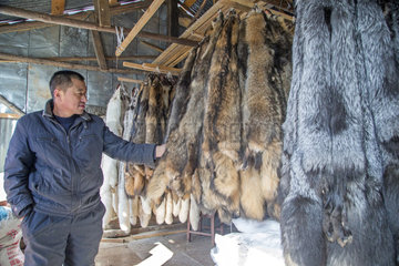 Fox farm and raccoon dogs for furs  Hengdaohezi  Heilongjiang  China