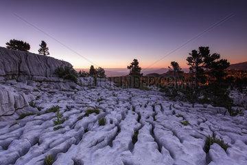 Karstic landscape  Parmelan limestone pavement. France  Haute-Savoie (74)  Bornes Massif