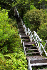 Forest walkway Staircase - Patagonia Chile