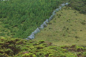 Landscapes of the islands of Pico and Sao Miguel  Azores. Portugal