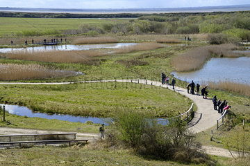 Nature tourists discovery tour  Marquenterre park  Somme bay  France