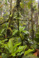 Undergrowth of Atlantic Forest - Serra Bonita Bahia Brazil