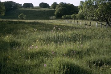 Prairie en fleurs en fin d'après-midi sur l'Aubrac Lozère