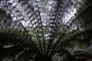 Range of ferns in back-light Cornwell