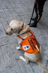 Security Dog - Bogota Colombia