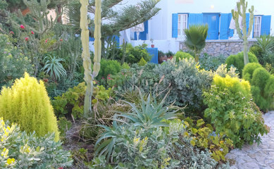 A private garden with a wide variety of Mediterranean plant species adapted to the climate of the Cyclades  kamari  Santorini  Cyclades  Greece