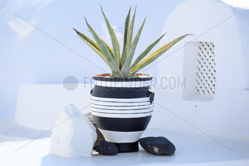 Aloe vera in pot and village of Fira in background  ambiance decoration  Santorini Island  Cyclades  Greece