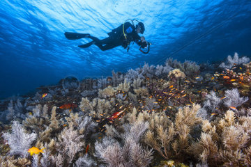 Diver on landing at the edge of the south pass bateau  Mayotte  Indian Ocean