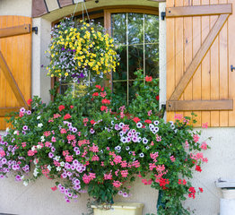 Garden flowers and flourished house  Alsace  France